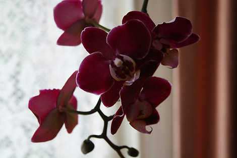 20101106_orchid-470_4505.jpg