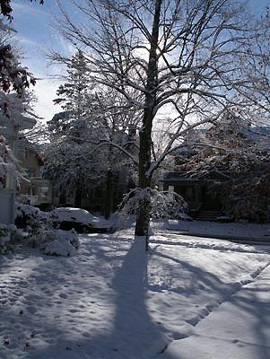 00v_snow-tree-nov04.jpg
