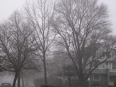 fog-jan05.jpg