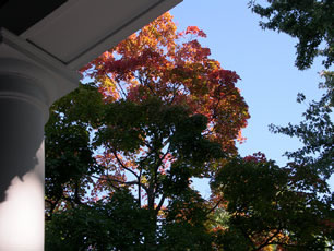 porch-maples.jpg