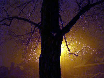 rainfog-jan05.jpg
