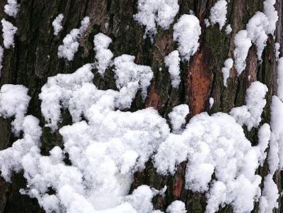 050204_tree.jpg