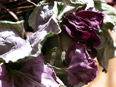 050301_violets.jpg