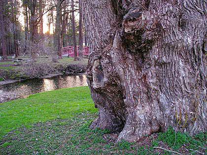 050418_tree.jpg
