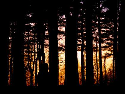 050418_woods.jpg
