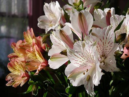 050508_flowers.jpg