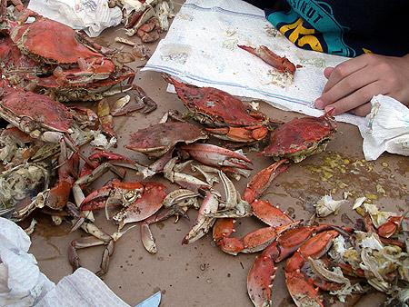 050708_crabs.jpg