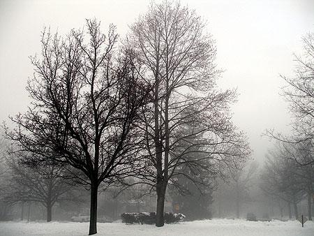060125_mist.jpg