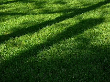 060615_grass.jpg