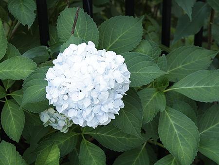 080819_flower.jpg