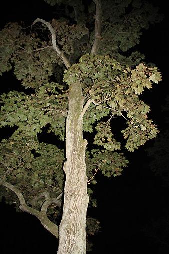 080902_tree.jpg