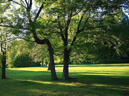 080920_tree.jpg