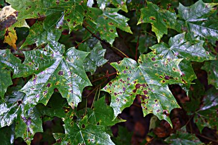 080928_leaves_3728.jpg