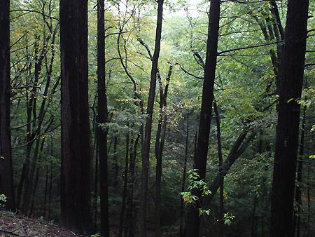 080928_trees.jpg