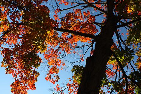 081011_tree_4090-sm.jpg