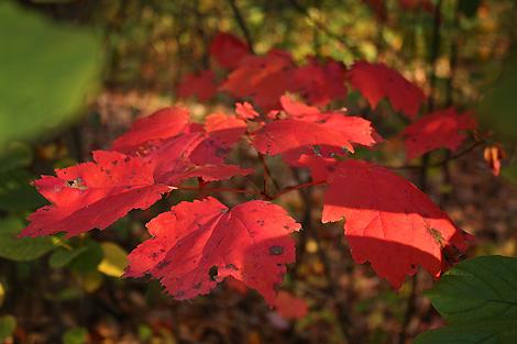 081018_leaves2_4482-470.jpg