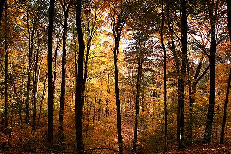 081018_trees_4412-470.jpg