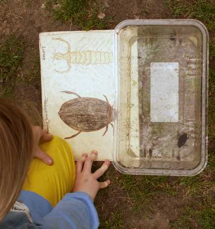 Student examining diving beetle